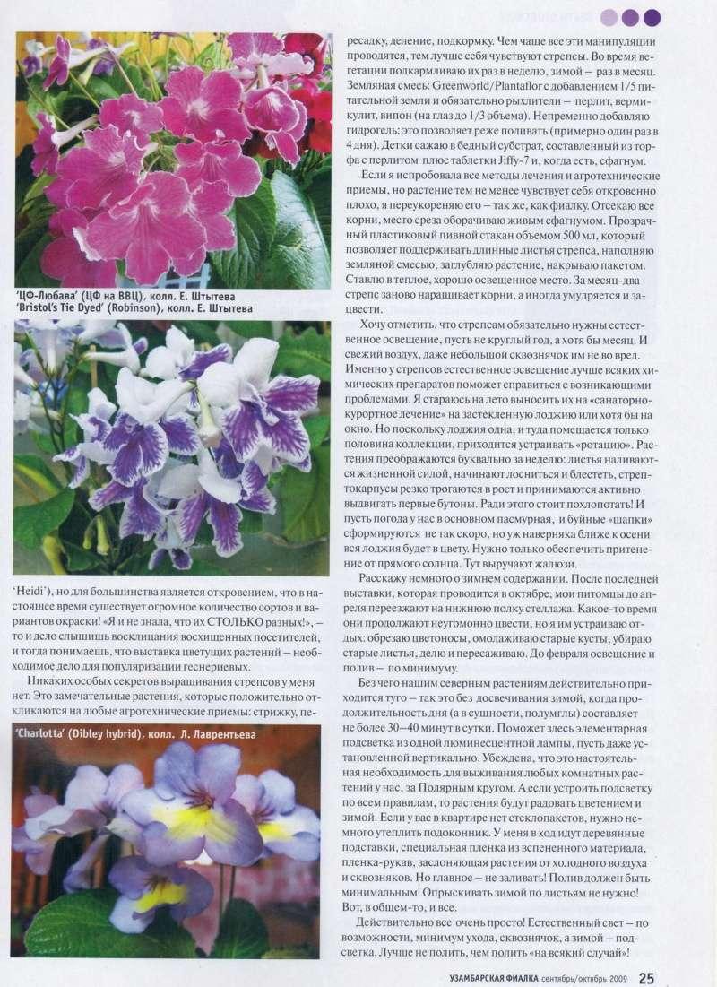стрептокарпус уход и размножения 111_210