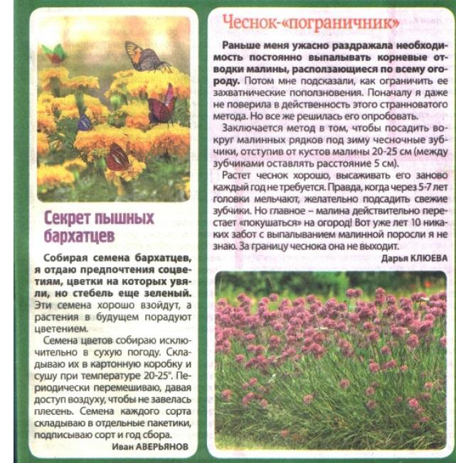 статьи о растениях из  газет и журналов - Страница 2 11862610