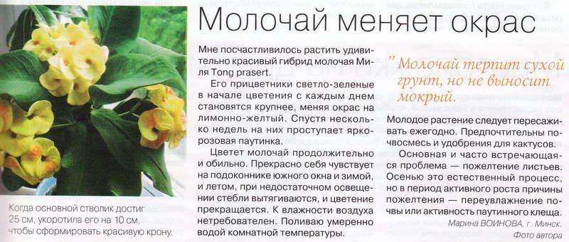 статьи о растениях из  газет и журналов 13945410