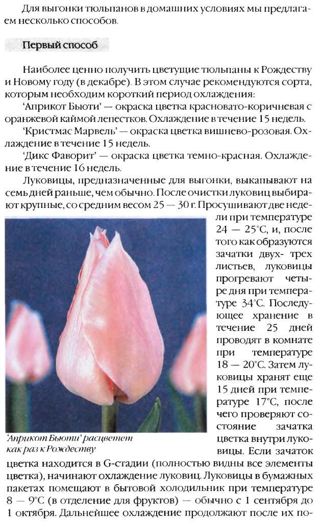 Выгонка луковичных растений 15910