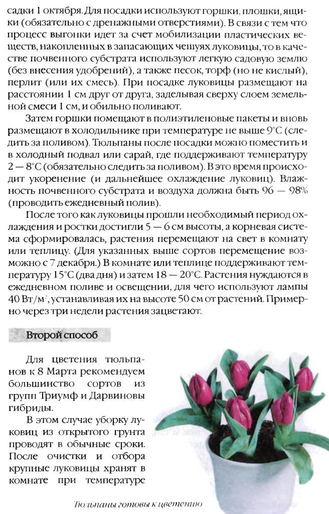 Выгонка луковичных растений 16010