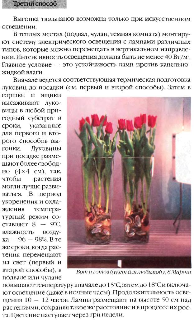 Выгонка луковичных растений 16210