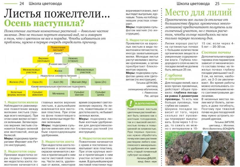 статьи о растениях из  газет и журналов - Страница 2 24-2510