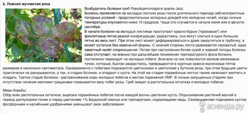 Болезни комнатных растений 48846610