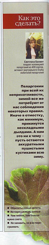Пеларгония (Герань) 62bb9410