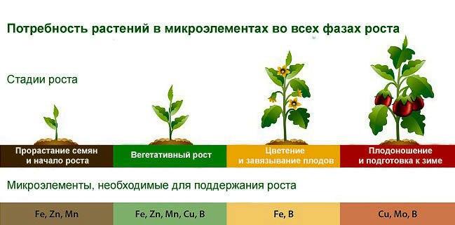 Болезни комнатных растений 6gscyp10