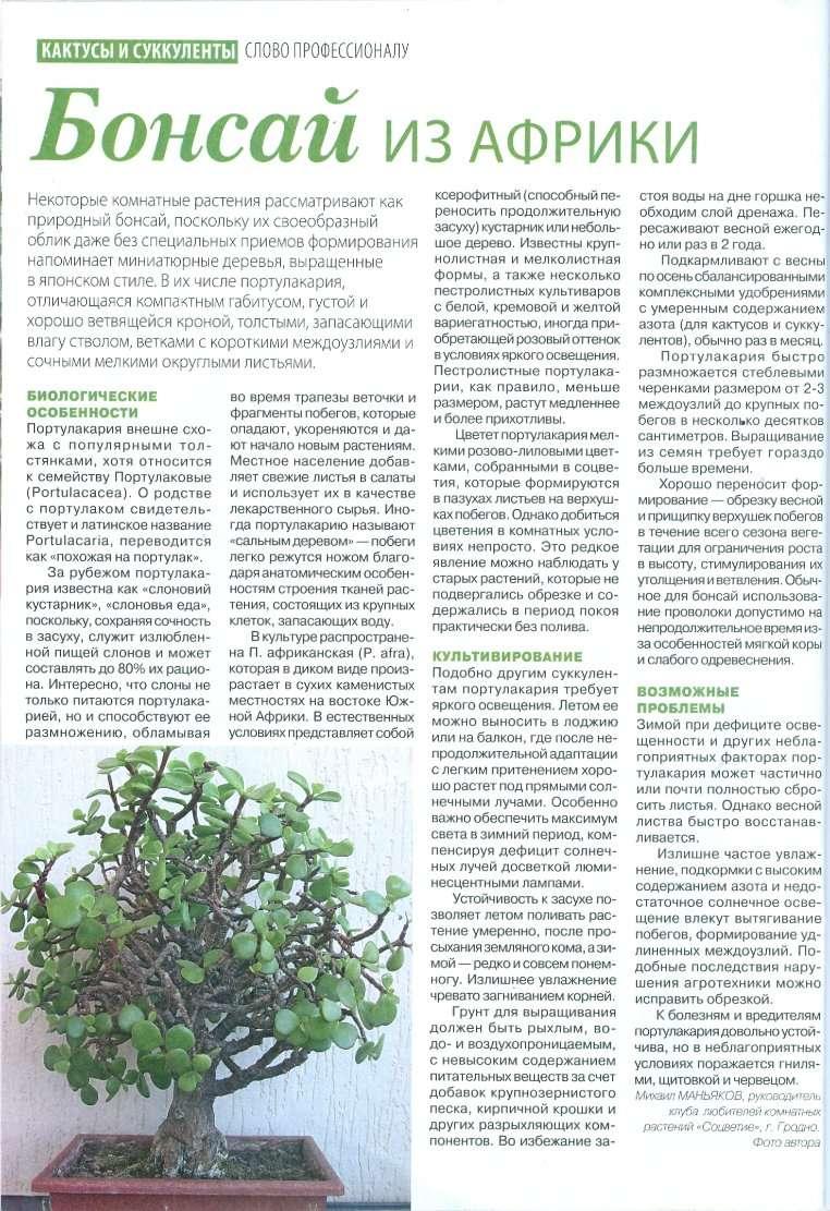 статьи о растениях из  газет и журналов - Страница 2 7505d510