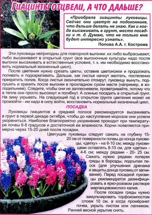 Выгонка луковичных растений 89473010
