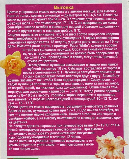 Выгонка луковичных растений 9e023c11