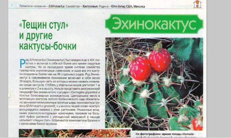 Кактусы и суккуленты Czuwrj10