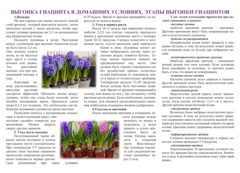 Выгонка луковичных растений D092d110