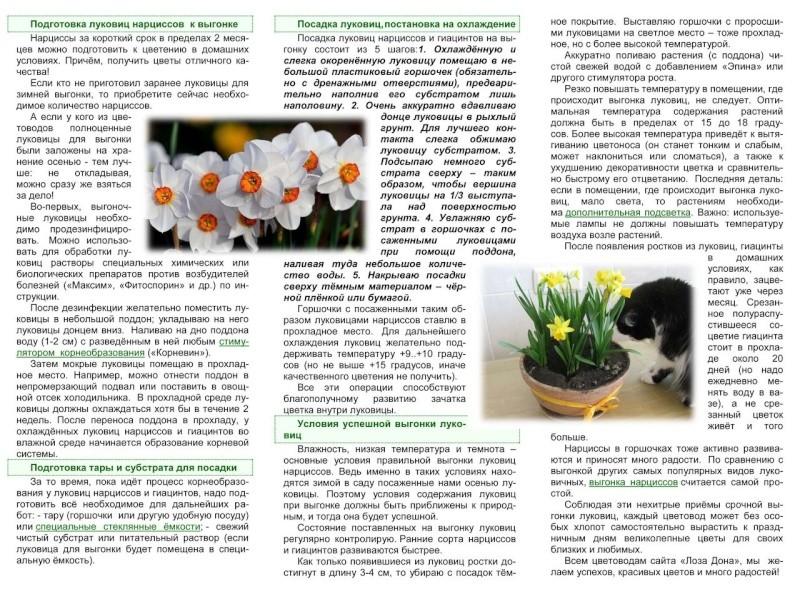 Выгонка луковичных растений D09dd010