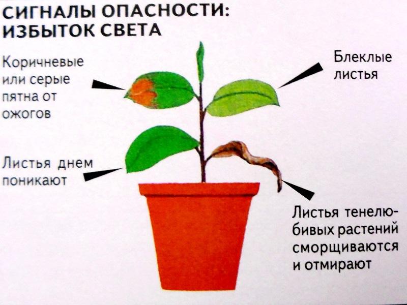 Болезни комнатных растений D181d010