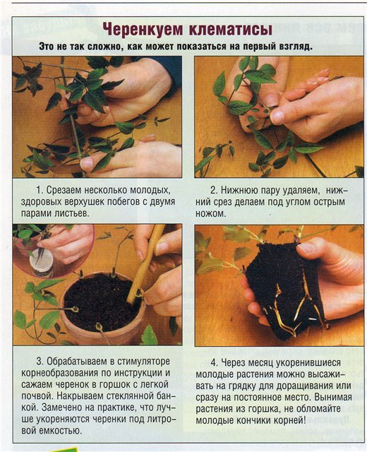 статьи о растениях из  газет и журналов - Страница 2 E4ea2d10