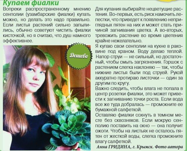 узамбарская фиалка или сенполия Gyvo7610