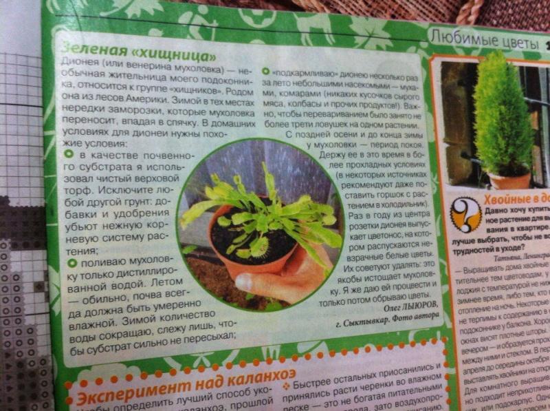 статьи о растениях из  газет и журналов - Страница 2 Hnygio10