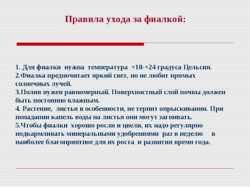 узамбарская фиалка или сенполия Img1310