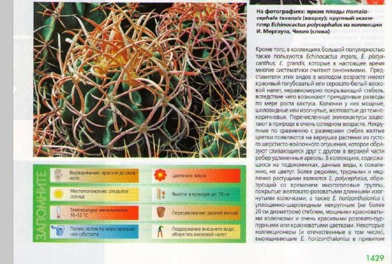 Кактусы и суккуленты K7gvsk10
