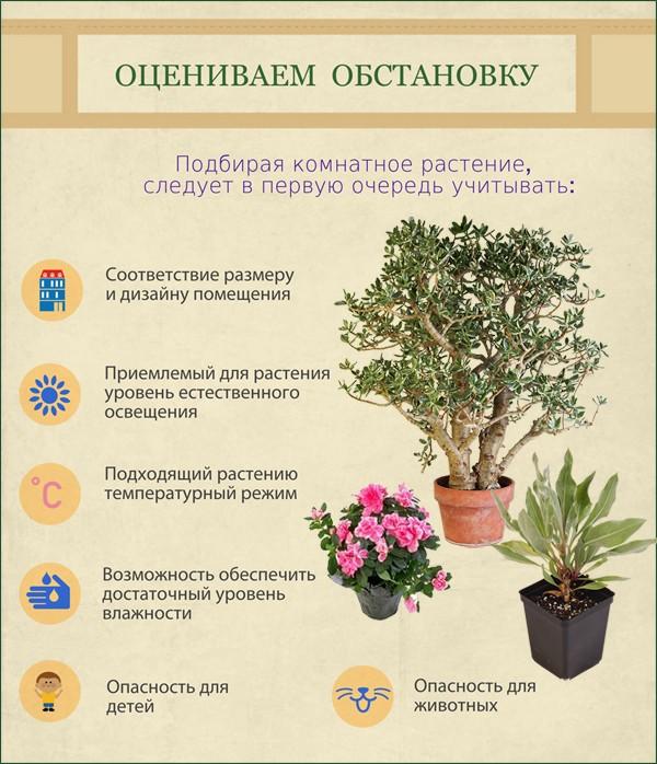 статьи о растениях из  газет и журналов Komnat10