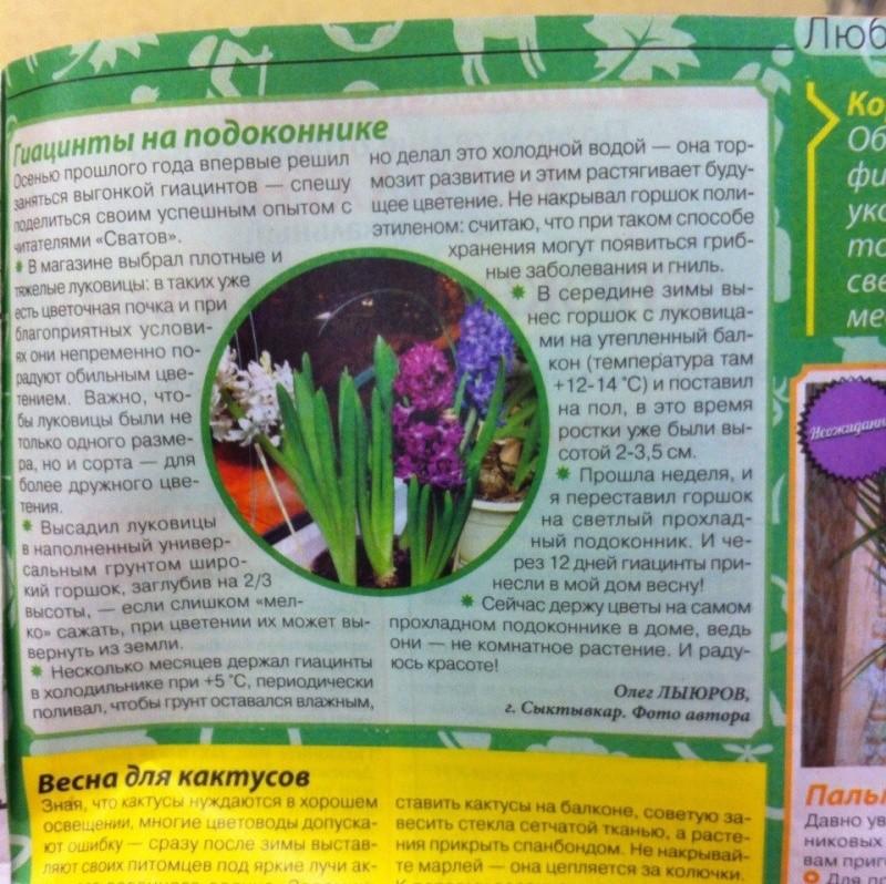 Выгонка луковичных растений M2v78r10