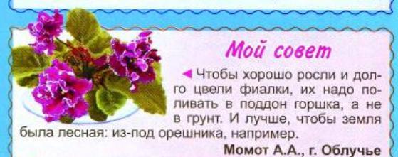 узамбарская фиалка или сенполия Oa1010