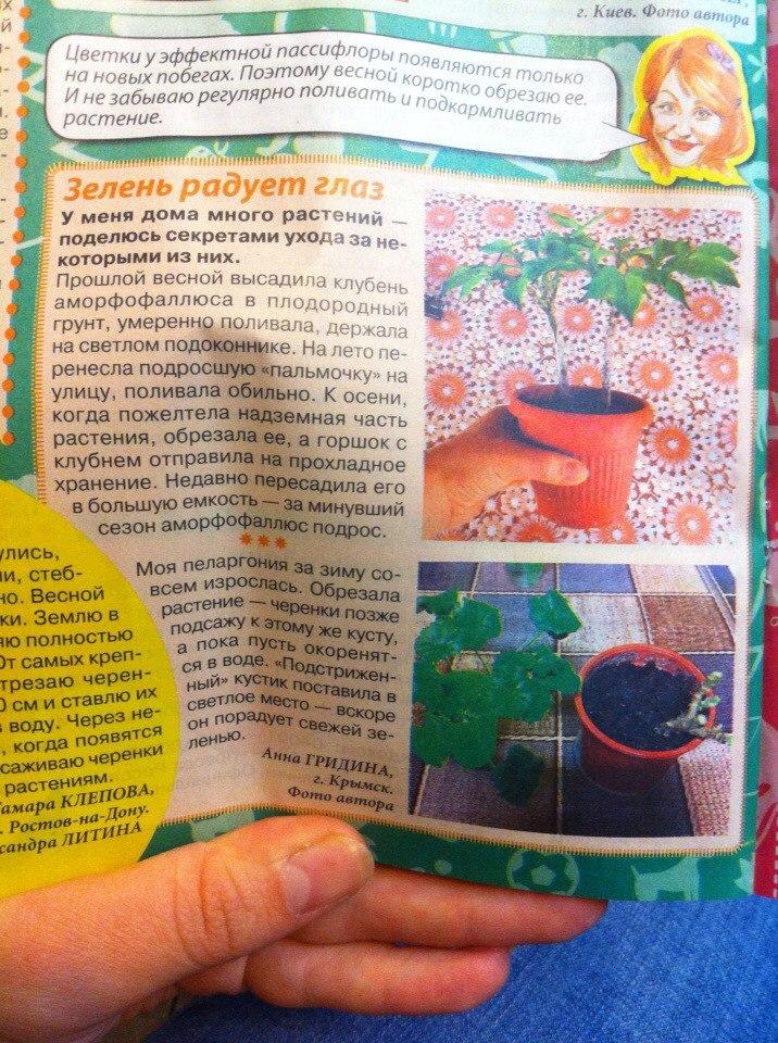 статьи о растениях из  газет и журналов - Страница 2 Pedcfr10