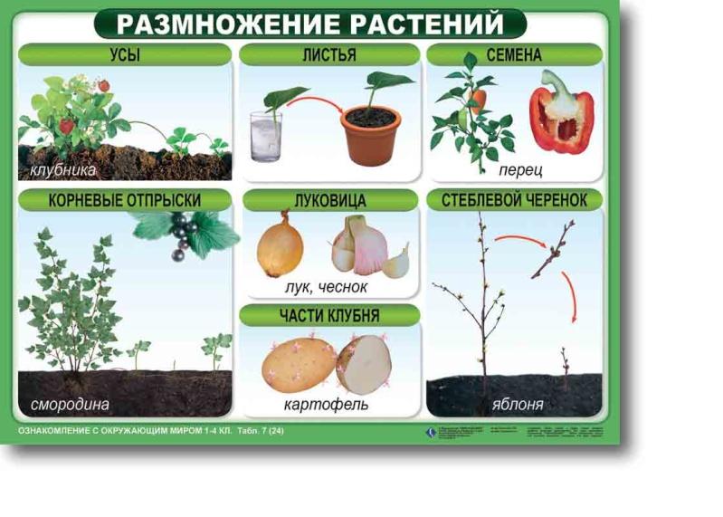 статьи о растениях из  газет и журналов - Страница 2 Pkiraa10