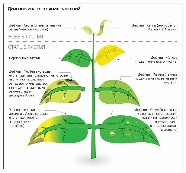 Болезни комнатных растений Plxt7b10
