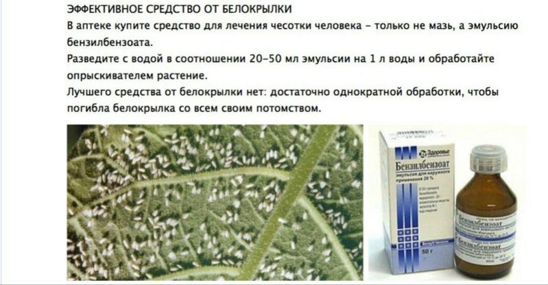 вредители комнатных растений Sckxnm10