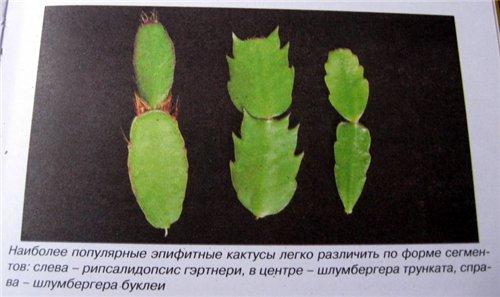 Кактусы и суккуленты Xttjvf10