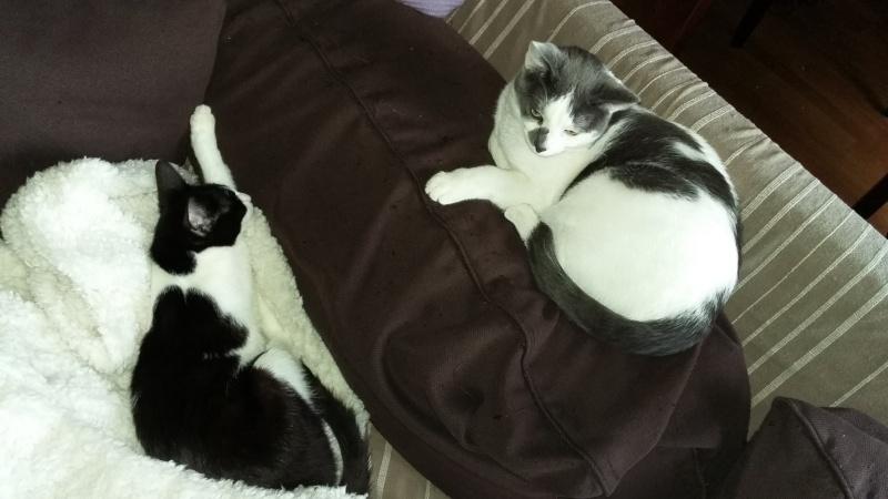 LILOU -  chat femelle, née en août 2015, chez Alina - en FA chez Sabine (dpt77) - décédée 20160318