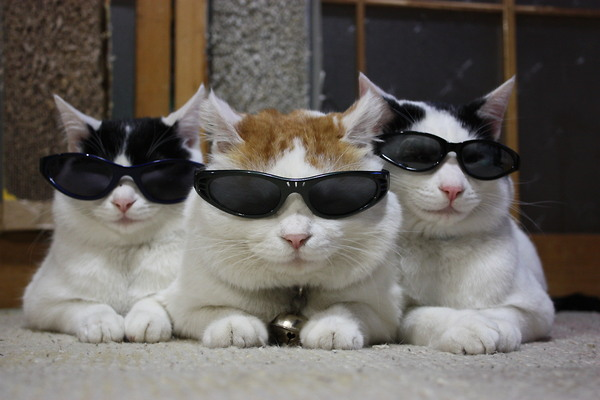 Cool cats chewing the fat
