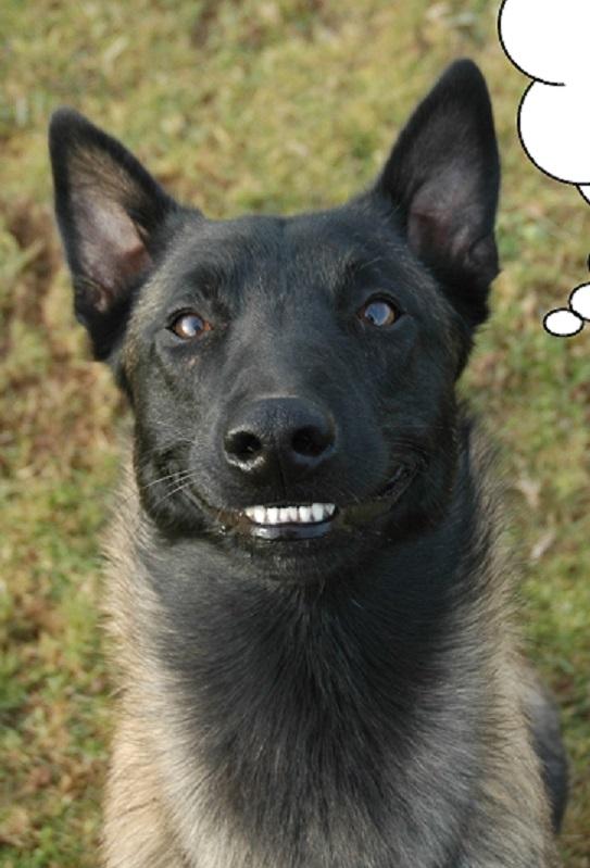 Un certain sourire... - Page 2 Mongol10