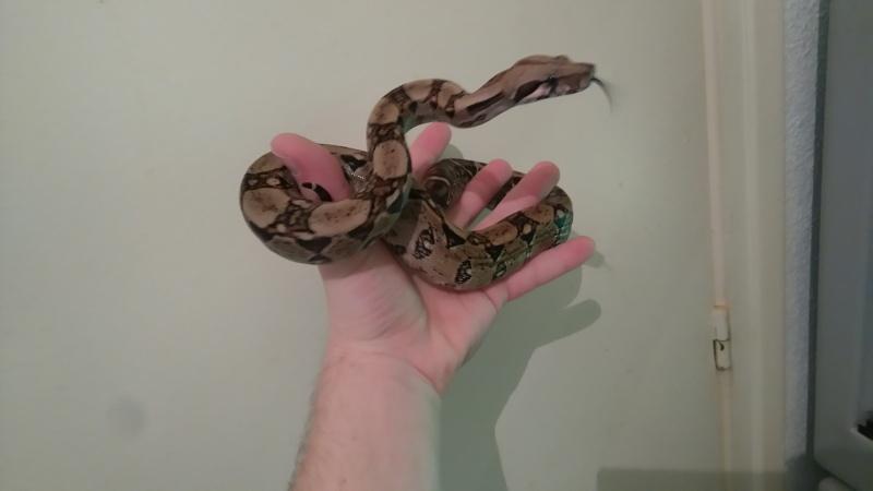 Mes 7 serpents Dsc_0015