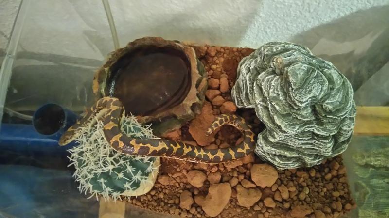 Mes 7 serpents Dsc_0110