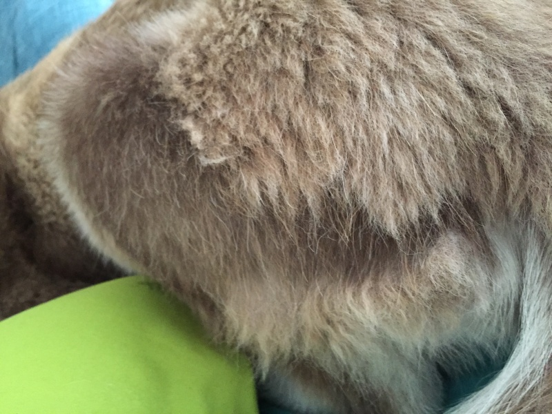 Puppy shedding entire coat Image18