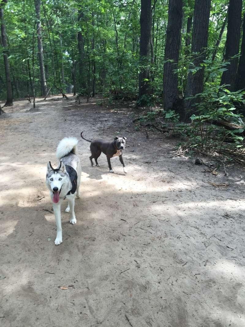Timber Creek Dog Park Img_0210