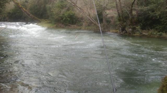 ruisseau - sortie au ruisseau le céou .dordogne. Ceou_111