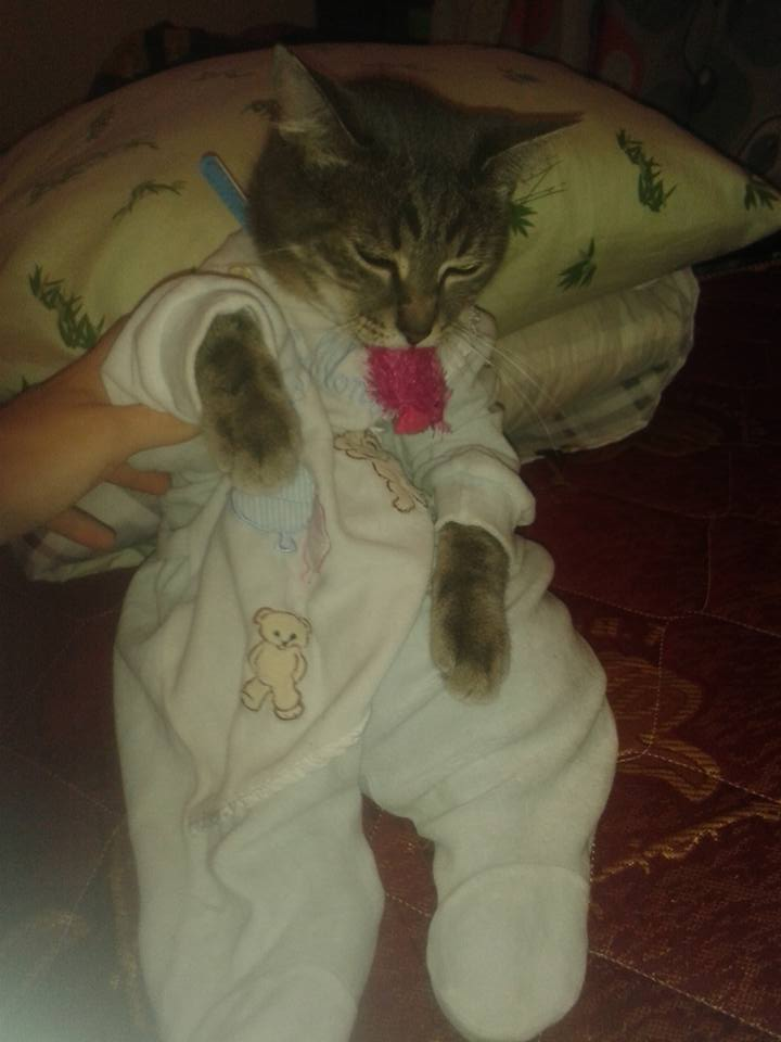 tomy le chat 10997310