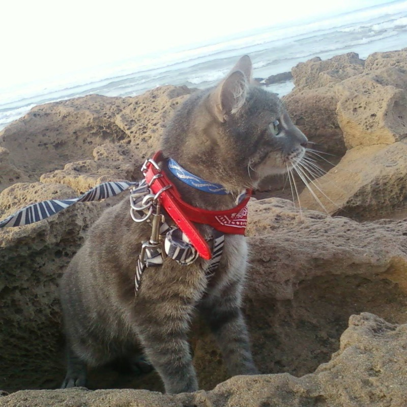 tomy le chat 11200910