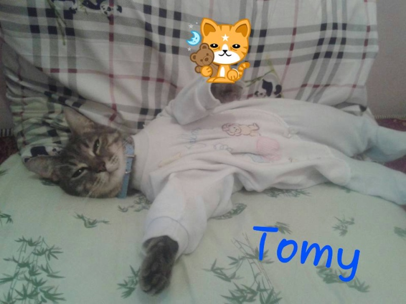 tomy le chat 14609710