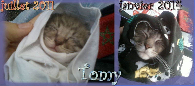 tomy le chat 15022410