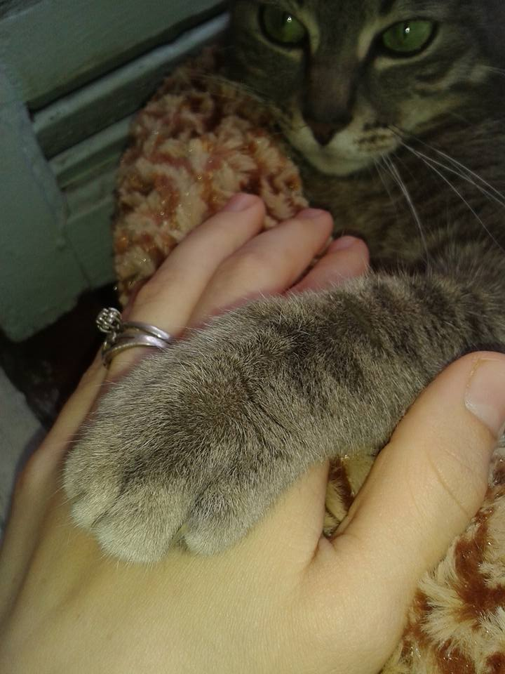 tomy le chat 19075410
