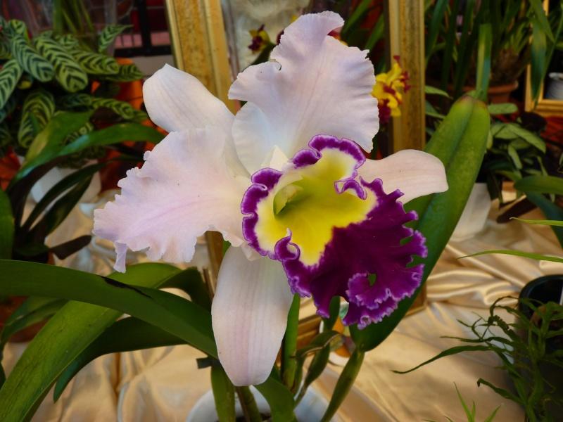 !3. Orchideenschau in Zwickau! P1080011