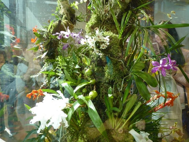 !3. Orchideenschau in Zwickau! P1080014