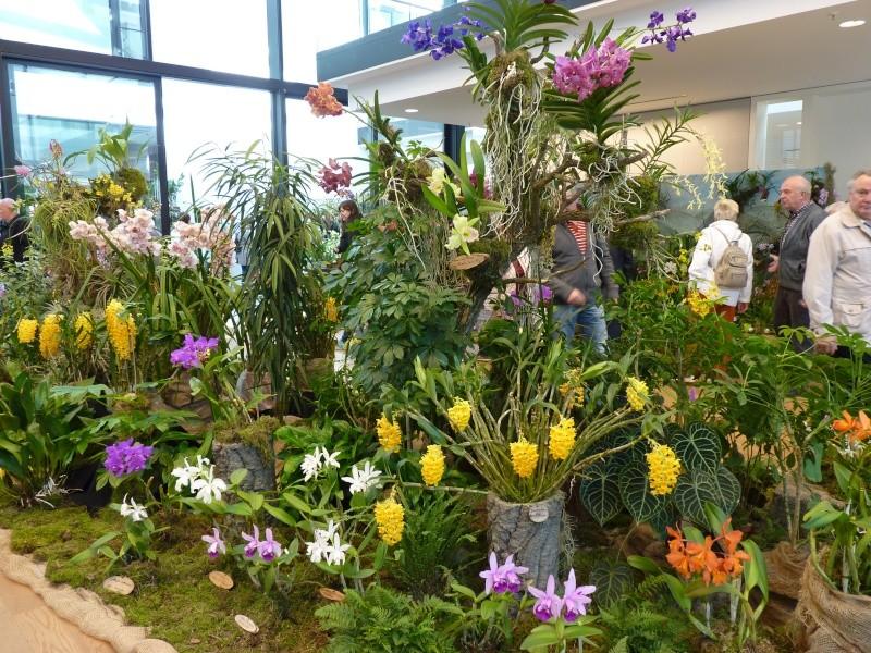 !3. Orchideenschau in Zwickau! P1080016