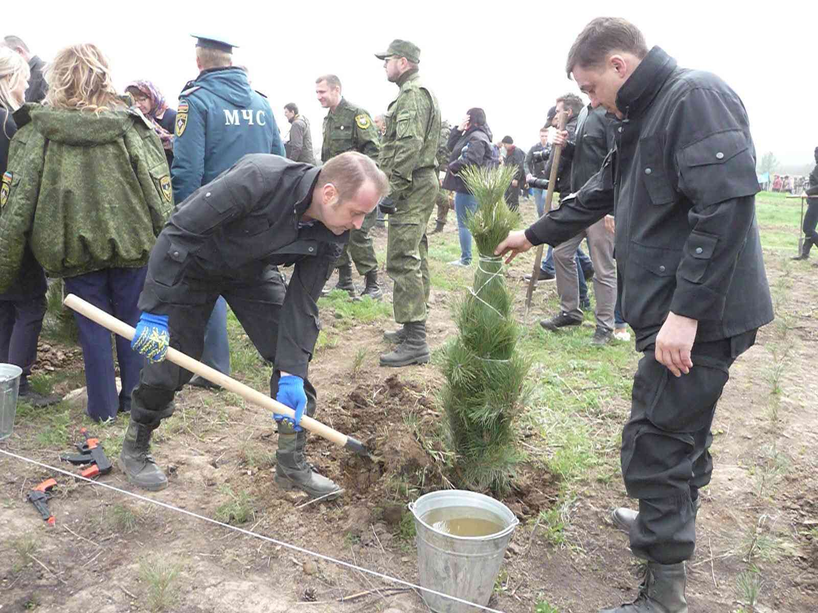 Сосновый бор в виде надписи «ДНР» высажен на месте леса, сожженного ВСУ 9210