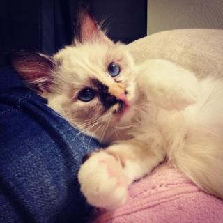 Nisca, mon chaton! Image11