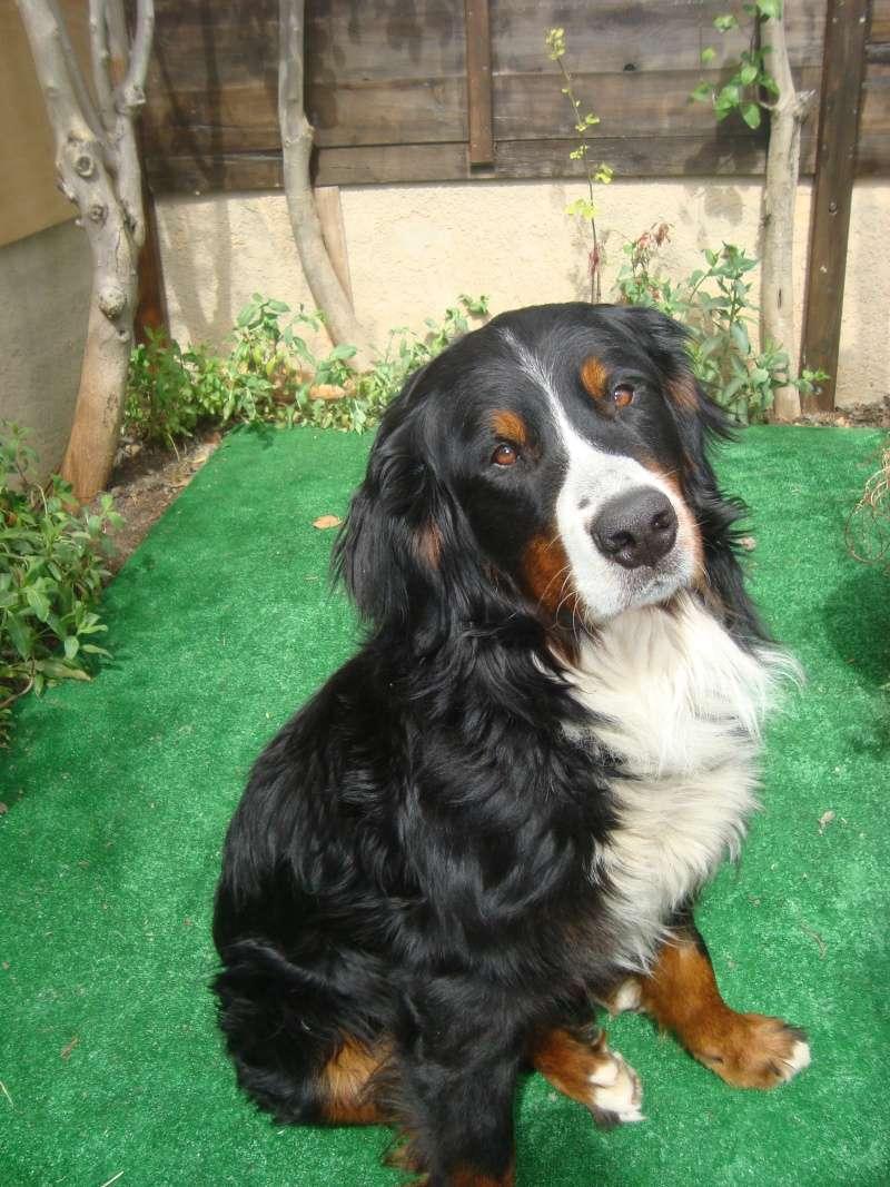 Notre nouveau chien SKY Gus_av10