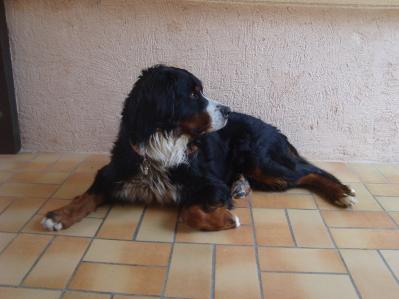 Notre nouveau chien SKY Photos10
